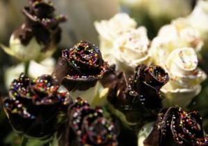 チョコレートローズ 通販