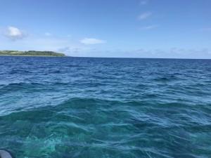 西表島の不思議な植物